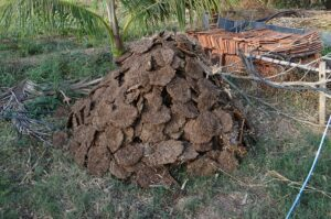 uses of cow dung